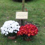 Dąb Józef Piłsudski posadzony w 100. rocznicę Odzyskania przez Polskę Niepodległości